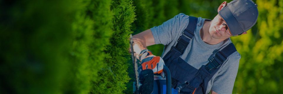 Your lawn and landscape the way that it should